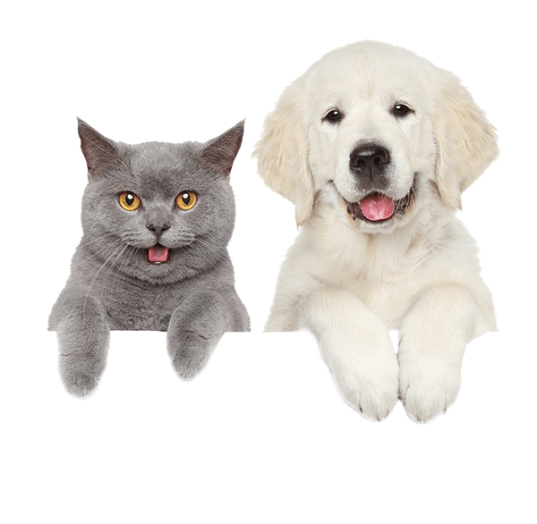Check our pet care centers to get the best pet care services