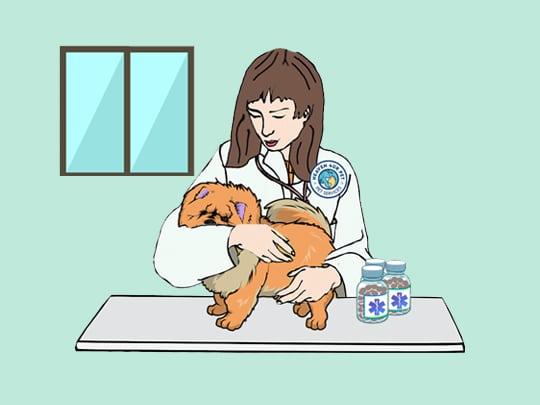 pet insurance services through pet professionals