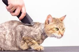 Cutting your cat's hair is a part of our Mobile Pet Grooming services