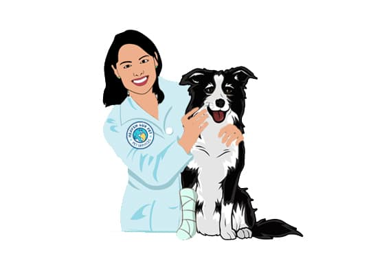 Our veterinary clinic offers Fractures Treatment