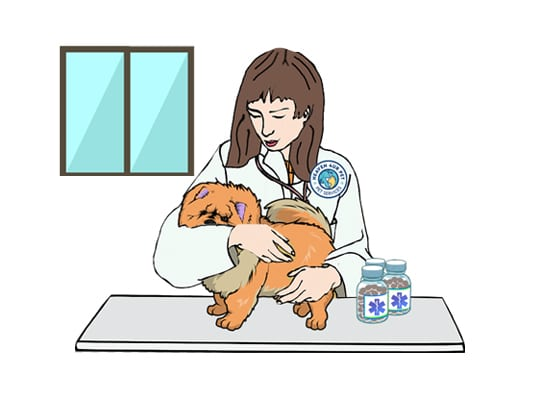Our veterinary clinic offers Pet diagnosis
