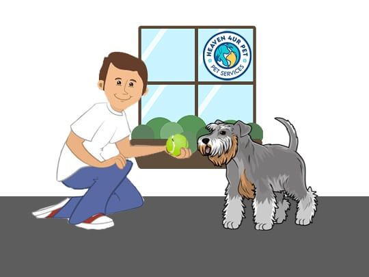 Assistance for pet owners
