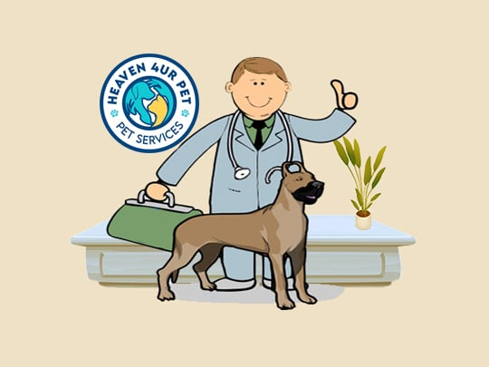 Our veterinary clinic offers Pets Treatment