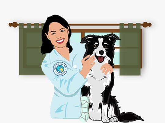 We employ veterinarians and staff that have worked before with world of animals Inc and George Washington University. So our veterinary specialty as well as the used veterinary medicine is of a top quality.