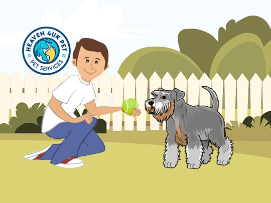 Write us a review if you are happy with our veterinary hospital and we helped you overcome your emergency situation.