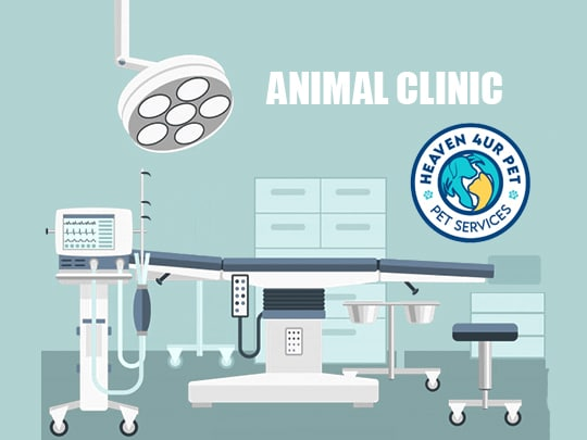 Emergency Vet services Recommended by Yorkshire animal hospital