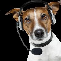 dog-operator-phone